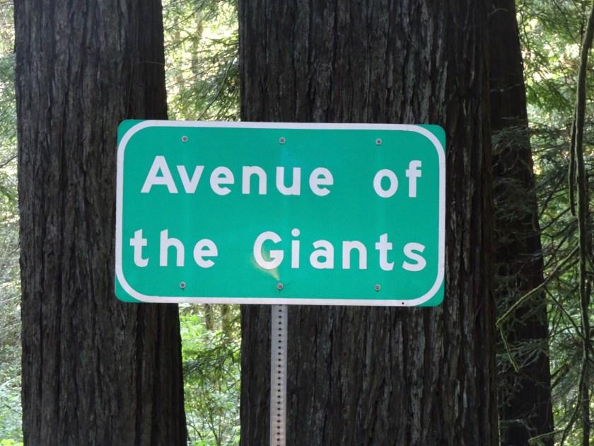 avenue of the giants (33)