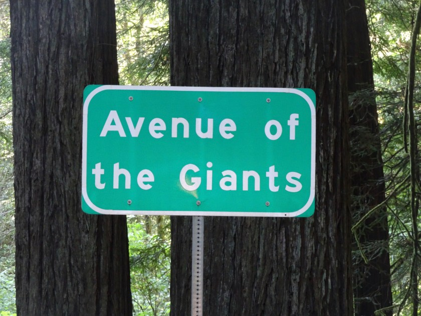 avenue of the giants (33)