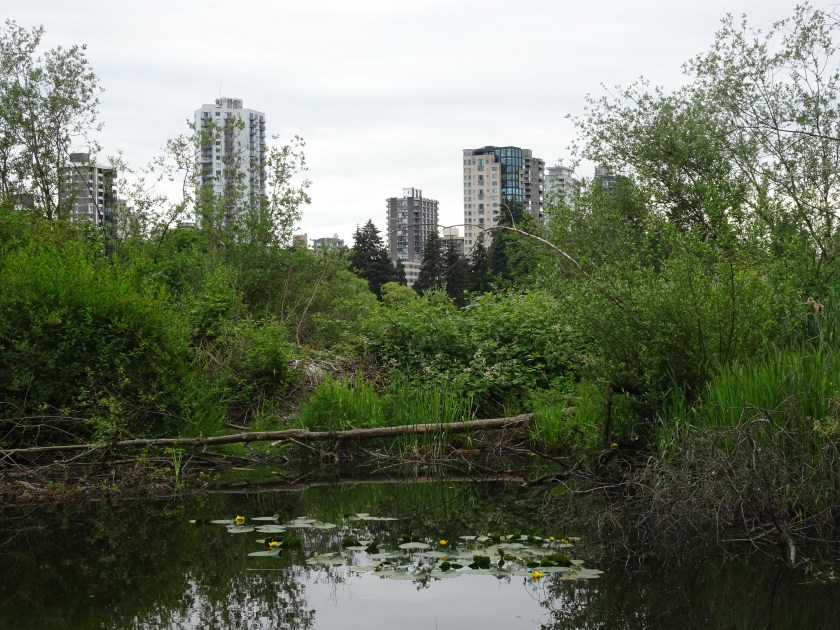 vancouver stanley park lost lagoon (2)