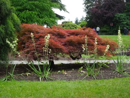 vancouver stanley park rosales plantas (6)