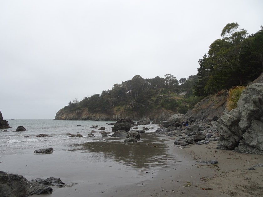 Sausalito california Muir beach san francisco (6)