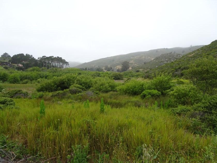 muir beach sausalito california senderos (1)