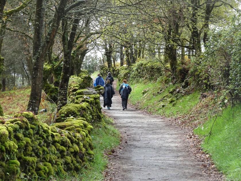 Camino de Santiago - Sarria Portomarin (54)