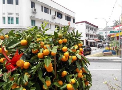 Up Close Orange trees