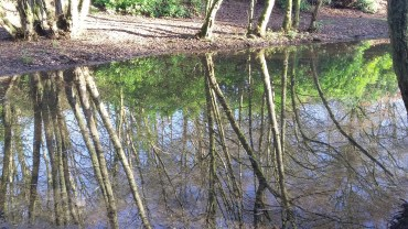 Reflections at Fishpond Wood