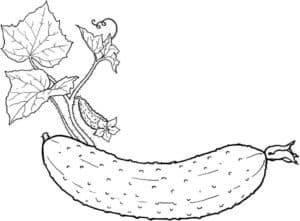 Раскраска Овощи для детей — распечатать и скачать бесплатно