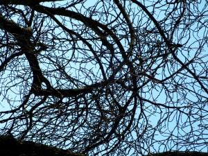 Zweige im Himmel