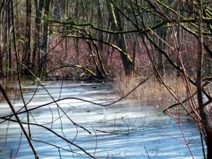 Vogelschutzgebiet am Rand von Bielefeld