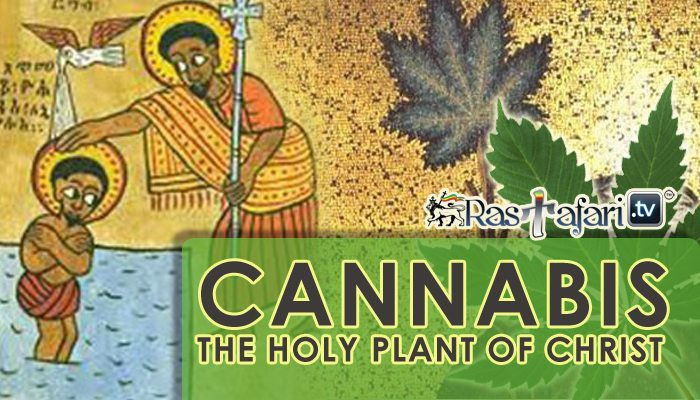 cannabis-marijuana-holy-plant-christ-rastafari-tv