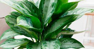 Каталог комнатных растений с фото и названиями