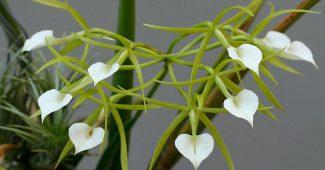 Каталог комнатных орхидей с фото, названиями и описанием