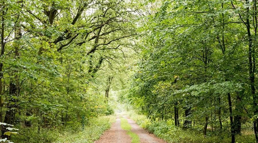 2500 Bäume zur Reduzierung der CO2-Emissionen.