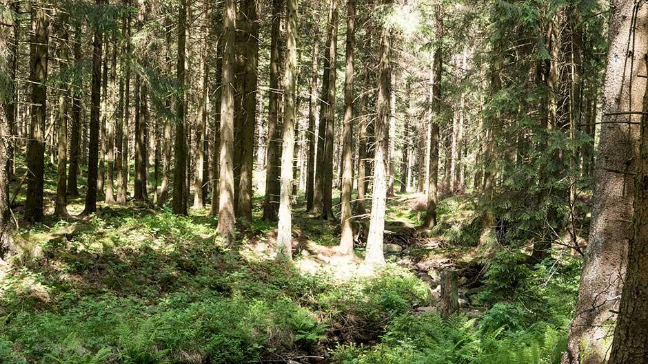 Unser Wald muss erhalten bleiben.