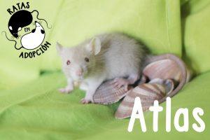 Atlas-1024x683