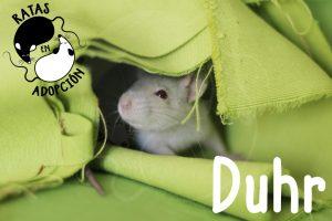 Duhr-1024x683