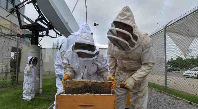 "<span class=""entry-title-primary"">Kids abuzz about bee course</span> <span class=""entry-subtitle"">Young beekeepers find community at Northlands</span>"