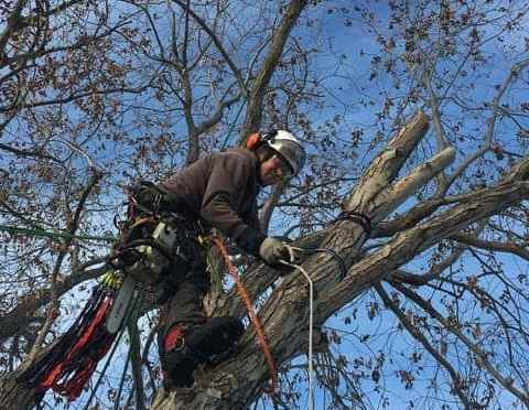"""<span class=""""entry-title-primary"""">Arborists improve tree health and beauty</span> <span class=""""entry-subtitle"""">Investing in proper tree care now pays off in the long run</span>"""