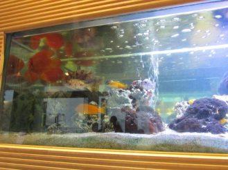 Feng Sushi Fish Tank