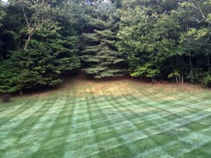 Lawn care service in Rhinebeck, NY