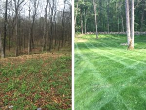 New-lawn-installations-image-(18)