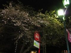 駅前のソメイヨシノ(31日夜撮影)