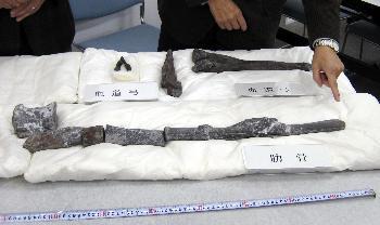 丹波地域で見つかった大型草食恐竜の肋骨とみられる化石(手前)=3日午後、兵庫県三田市の県立人と自然の博物館(産経新聞より)