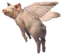Flyingpig_2