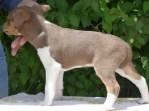 Buck - 6 weeks old