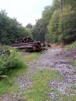 Holz, Bäume, Waldweg