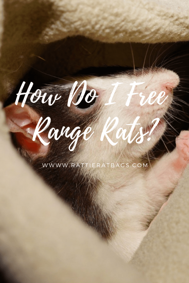 How Do I Free Range Rats - www.rattieratbags.com