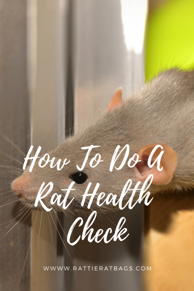 How To Do A Rat Health Check - www.rattieratbags.com