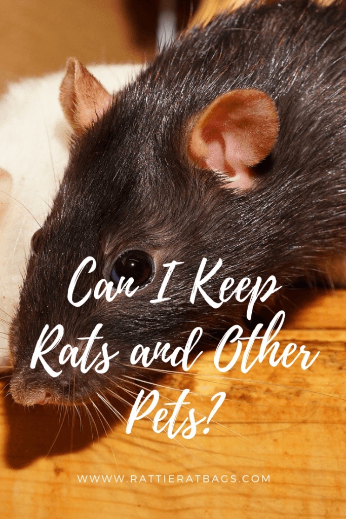 Can I Keep Rats and other pets - www.rattieratbags.com