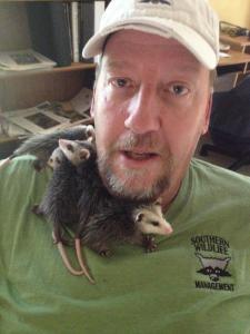 baby possumm removal