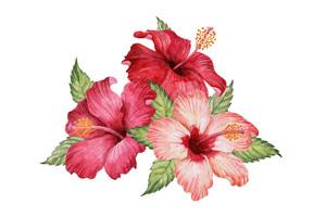 Drei Hibiskusblüten
