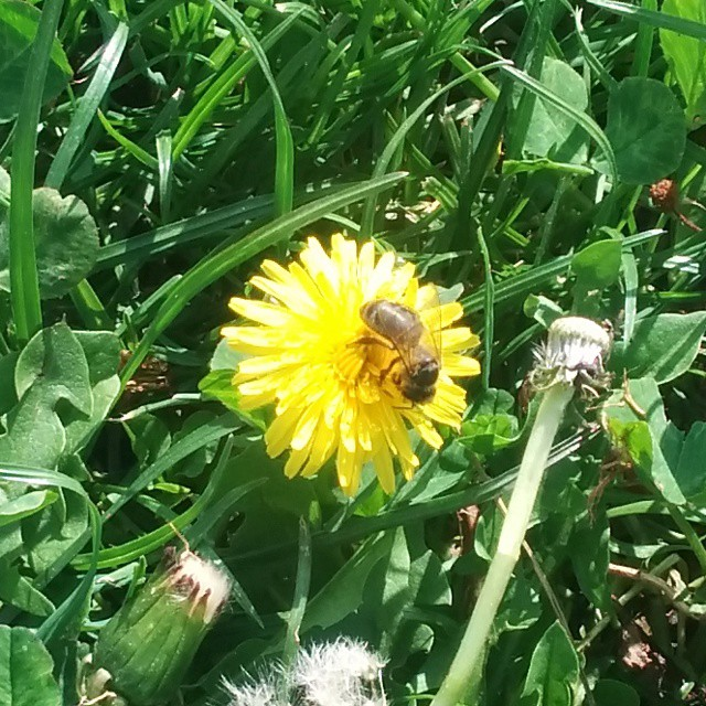 De flor en flor #spring