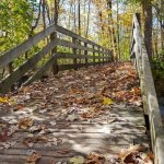 Wooden Bridge covered in fall leaves leading to a forest
