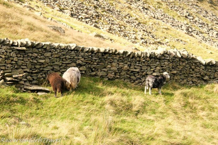 Three sheep by stone wall on green grass