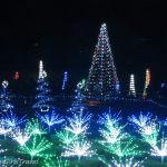Holiday lights as trees and bushes at Garden Glow at Missouri Botanical Gardens