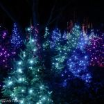Blue, Green, and Purple lights decorating trees at Garden Glow at the Missouri Botanical Garden