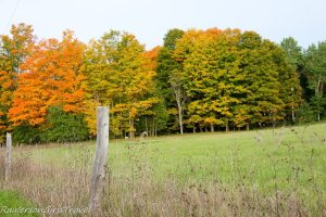 Fence post with colorful fall trees in Michigan
