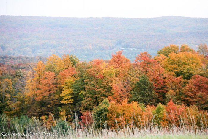 Fall trees in Michgan