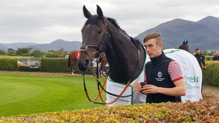Horses at Killarney Racecourse