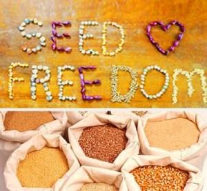 seedfreedom-politicafemminile