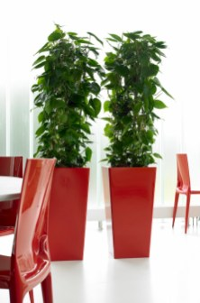 promo-40x40x131-RAL3020-Philodendron