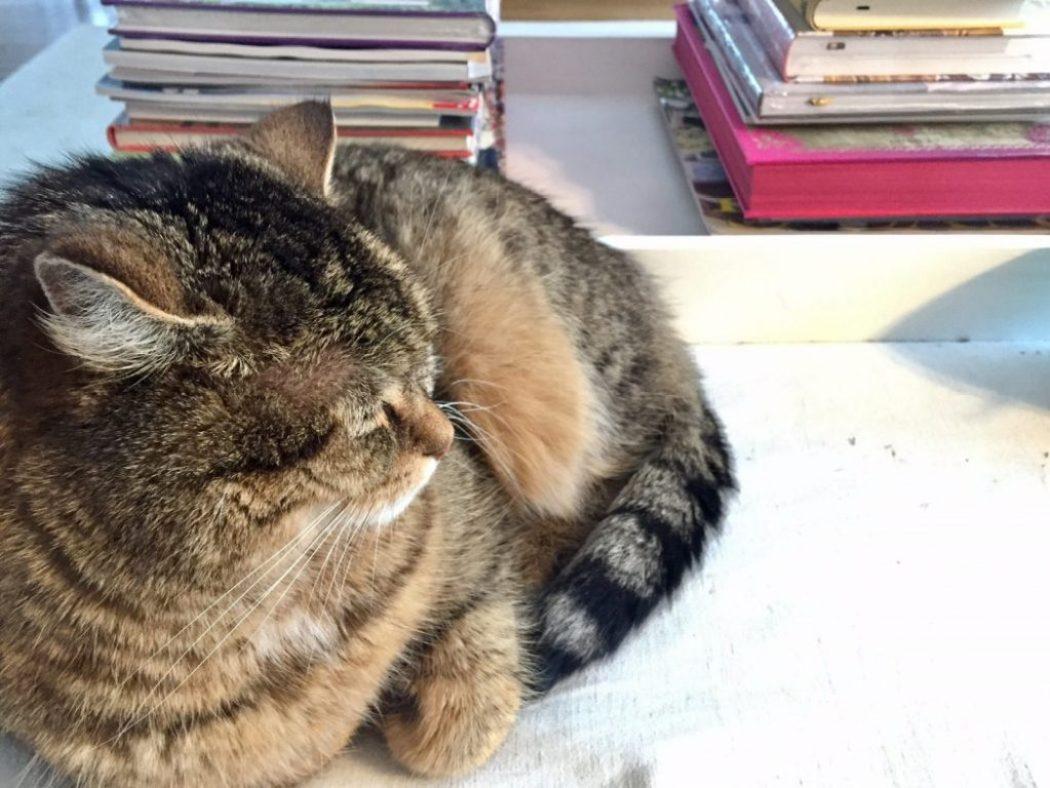 Lieblingsbücher kater vor bücherstapel