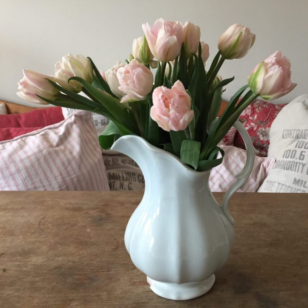 tulpen passen zum Genuss raumseele