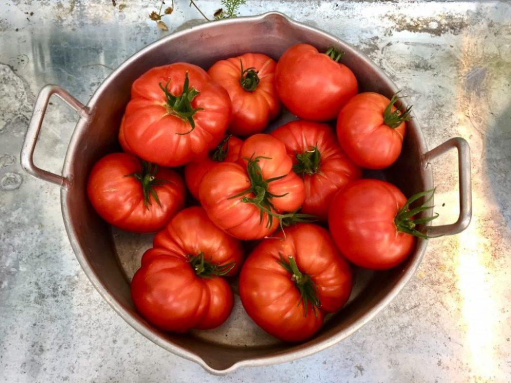 tomaten ernte aus dem garten