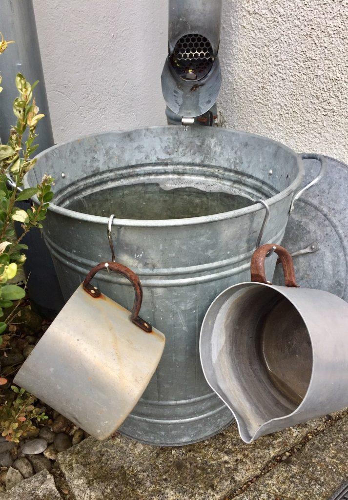 regenwasser ist wie eine Verjüngungskur für die Pflanzen