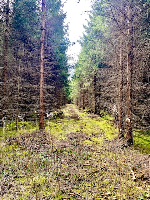 neue wege gehen. Folgt dem Wald, dann klappt das.