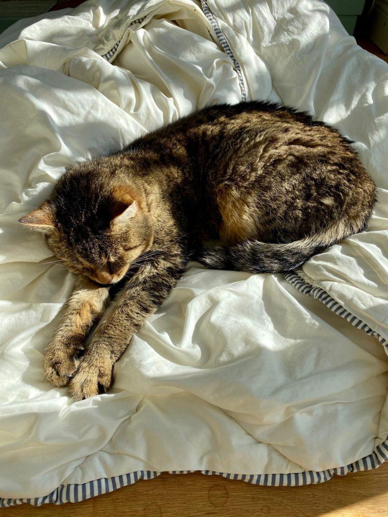 Niksen. Katzen können das perfekt.